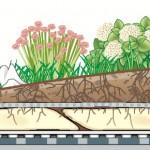 Tetto verde: il tetto fatto con le piante
