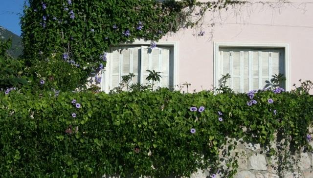 Idee per coprire muro esterno awesome rivestire muro - Intonacare muro esterno ...