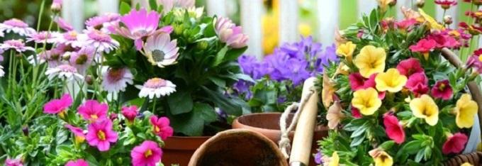 Piante da esterno piante da balcone e da terrazza - Piante da terrazza ...
