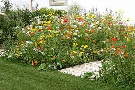 prato erboso alternative sostituire sistemare giardino. Black Bedroom Furniture Sets. Home Design Ideas