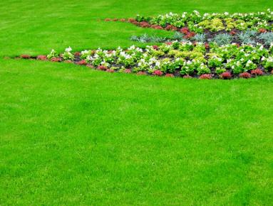prato verde in giardino
