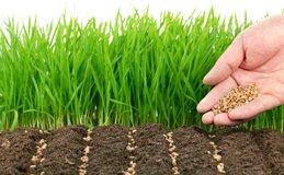 preparazione e semina del prato verde