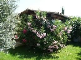 siepi per giardino