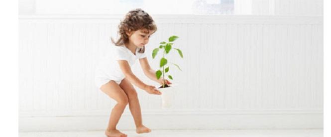 piante purifica aria