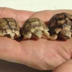acqua-terrario per le tartarughe acqua dolce