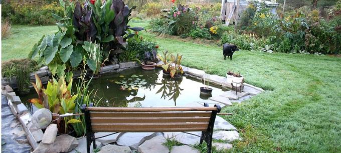Specchi d 39 acqua in giardino for Vaschette tartarughe