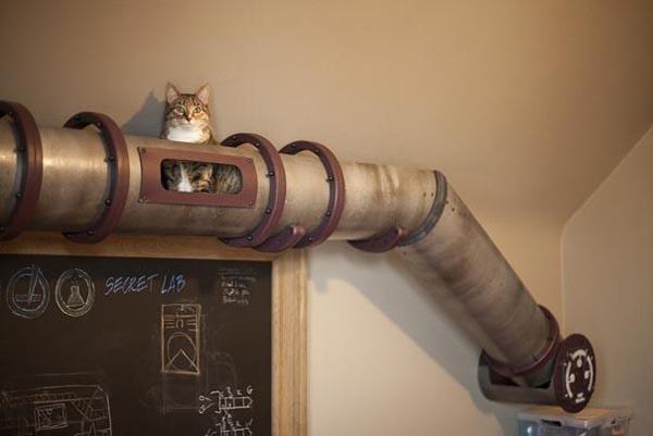 giochi gatti in casa