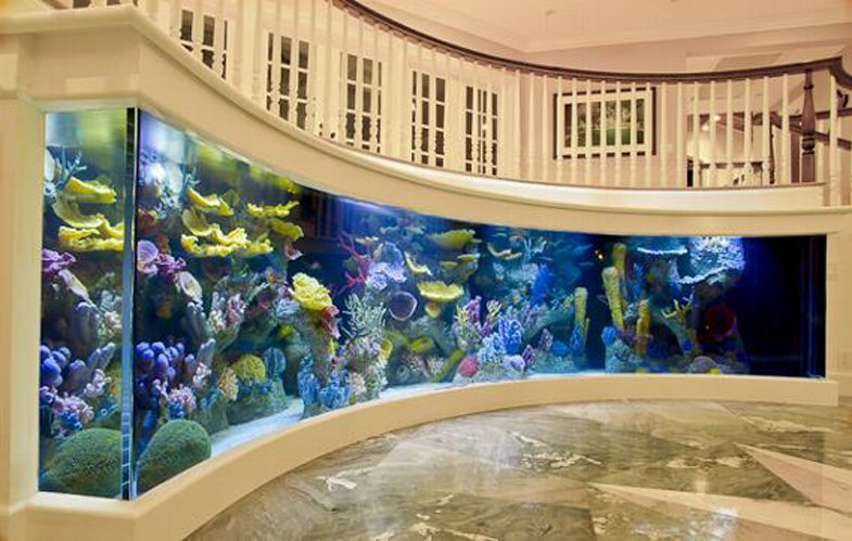 pet-therapy con acquario