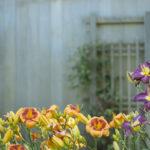 giardinaggio e attrezzi giardino