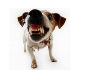 Rumori molesti in condominio abbaiare dei cani for Cane che abbaia