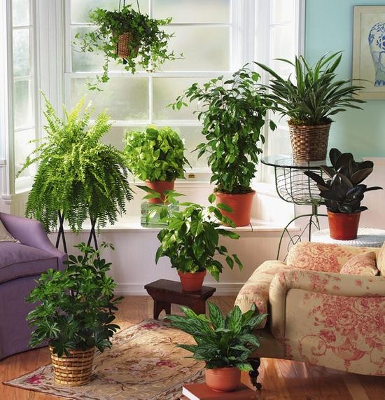 spazi verdi in casa